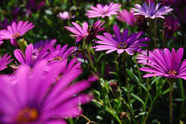 Curs de jardineria ecol gica i disseny for Jardineria ecologica