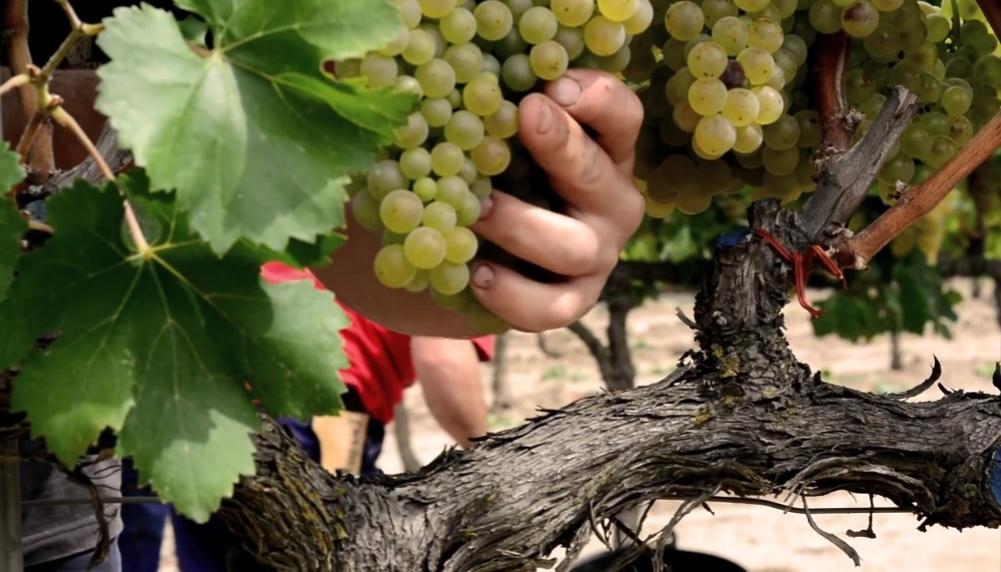 La cooperativa L'Olivera uneix agroecologia i economia social i solidària en un projecte de conreu de vinya i olivera orientat a la producció de vi i oli. Font: L'Olivera/Road4World