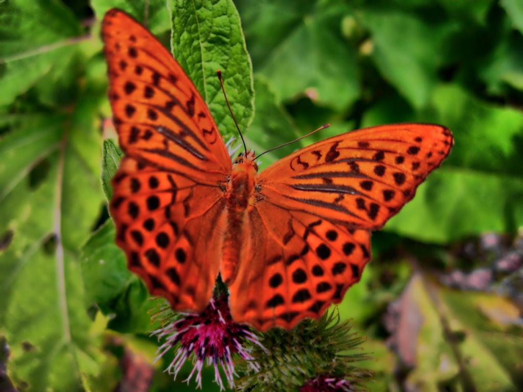ButterflyEffect. Font: piermarco (Flickr)