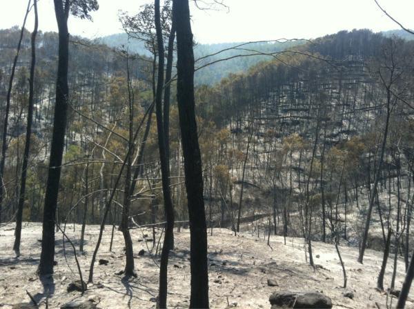 Imatge del bosc cremat a Terrades. Autor: Jordi Borràs