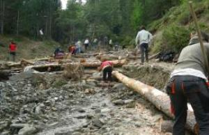 (imatge: Projecte Boscos de Muntanya)