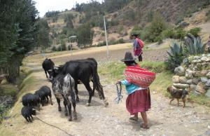 Comunitat d'Huapra, als Andes Peruans (Font: Lluís Miquel Pla)