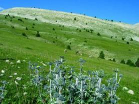 Biodiversitat a Catalunya
