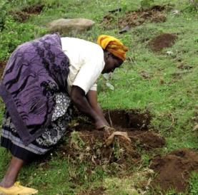 Dona treballant la terra