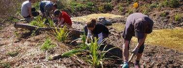 Curs online d'iniciació al voluntariat ambiental