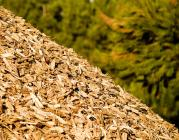 Biomassa (foto: flickr, Rui Ornelas)