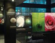 Biomimesis, el disseny inspirat en la natura
