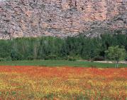 La conservació del patrimoni natural a Catalunya: problemàtica, anàlisi i oportu