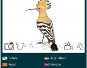 """""""Las Aves de España"""" de SEO/Birdlife"""