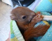 (imatge: Centre de Fauna Salvatge dels Aiguamolls de l'Empordà)