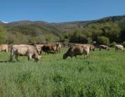 """Jornada """"Interaccions de la fauna salvatge i els ramats domèstics"""" (rurbans)"""