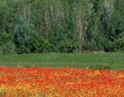 Aspectes clau de conservació del patrimoni natural de Catalunya