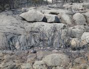 Bosc cremat. Paisatge desolador arrel d'un incendi_Josep Lluís Ruiz_Flickr