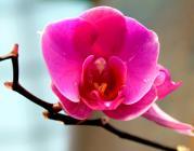Orquídia. Font: Digo_Souza (Flickr)