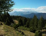 Bosc de muntanya del Pallars (foto: PBM)