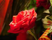 Rosa. Sant Jordi_visualpanic_Flickr