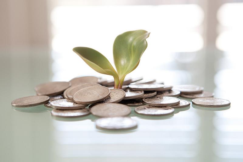 Money plant. Font: Tax Credits (Flickr)