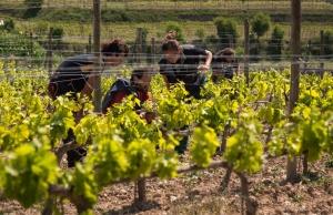 Cooperativa L'olivera, una de les entitats amb un projecte ApS.  Font: FAS