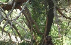 Neix un projecte de voluntariat pels boscos de Poblet
