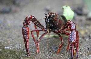 """Imatge de la notícia """"Invasive Alien Species"""": 11 accions de voluntariat contra les espècies invasores"""