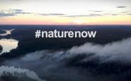 Protegir, restaurar i finançar la natura, clau per la lluita contra el canvi climàtic. Font: Natural Climate Solutions