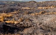 Rebrotem, la iniciativa solidària per fer front a l'incendi de la Ribera d'Ebre Font: Rebrotem