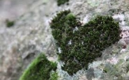 L'Associació Cen, Associació per a la Conservació dels Ecosistemes Naturals (imatge: assoc_cen.com)