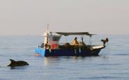El projecte vol preservar els cetacis i altres sers vius que formen part del nostre litoral. Font: SUBMON