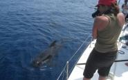 Submón centra la seva activitat molt especialment en els cetacis Font: Submón