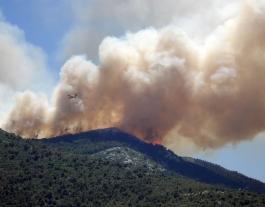 Mantenir un territori foral viu ajuda a rebaixar la intensitat del foc. Font: Llicència CC