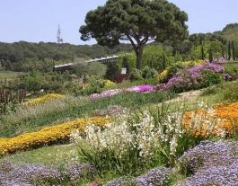 Planta't al Botànic (Barcelona, cada primer diumenge de mes).