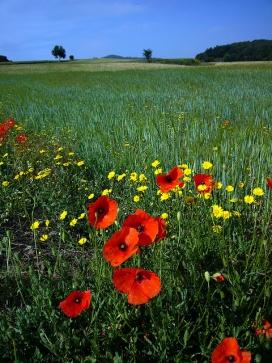 La Primavera als camps de les Gavarres. Font: Jofre Ferrer (Flicker)