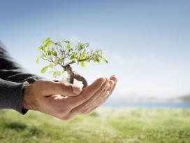 Gest de plantar un arbre. Font: samarag91, Flickr