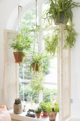 Les plantes purifiquen l'aire de casa (imatge: decoraemon)