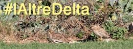 Qui ho desitgi pot compartir la riquesa biològica del Delta compartint imatges a les xarxes socials amb l'etiqueta #lAltreDelta (imatge: SOSDEltaLlobregat.org)