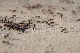 Fotografia d'un niu de formigues