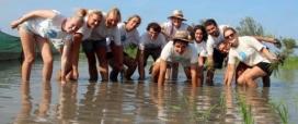 A Riet Vell, al Delta de l'Ebre, es pot passar uns dies com a voluntari i voluntària ambiental col·laborant en el projectes de conservació i agricultura ecològica