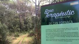 El bosc terapèutic afavoreix la salut i la conservació dels boscos