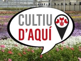 """Els vivers de producció local han creat la marca """"Cultiu d'aquí"""", per identificar les roses de producció local"""