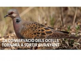 La recaptació del Festival es destina a la conservació de la tórtora