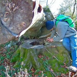L'Agrupació Naturalista i Ecologista de la Garrotxa proposa un projecte per la conservació dels boscos madurs