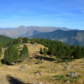 L'Associació Boscos de Muntanya promou la gestió sostenible dels boscos