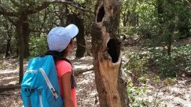 L'associació Sèlvans treballa la implicació de les escoles en la preservació dels boscos