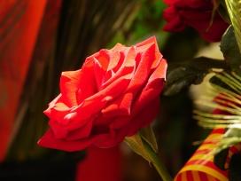 Per Sant Jordi vora 7 milions de roses es venen en un sol dia