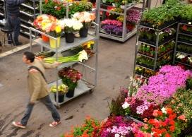 Imatge al Mercat de la Flor i la Planta Ornamental de Catalunya