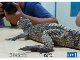 Postgrau sobre Coneixement del Món animal: Educació Sensibilització i Sensibilització