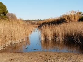 L'Associació Mediambiental La Sínia treballa per la conservació de les riberes del riu Gaià