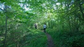 Un itinerari saludable en un bosc de La Garrotxa