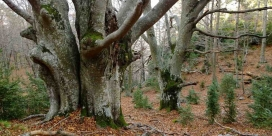 La missió de l'Associació Selvans és la protecció dels boscos madurs