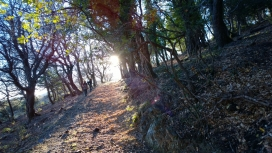 L'Associació Selvans ha identificat 30.000 hectàrees de boscos madurs a Catalunya